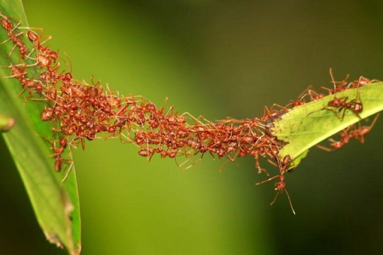 Ameisen-Org